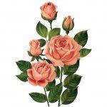 cvety i serdechki stickers telegram 28