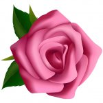 cvety i serdechki stickers telegram 65