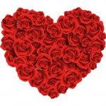 cvety i serdechki stickers telegram 74