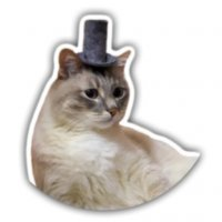 kot dzhaz stickers telegram 09