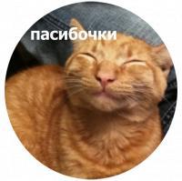 koty kus i cmok stickers telegram 03