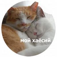 koty kus i cmok stickers telegram 06