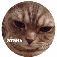 koty kus i cmok stickers telegram 10