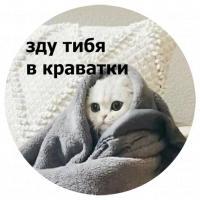 koty kus i cmok stickers telegram 11