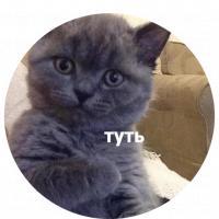koty kus i cmok stickers telegram 18