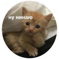 koty kus i cmok stickers telegram 22
