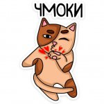 vljublennye kotiki stickers telegram 02