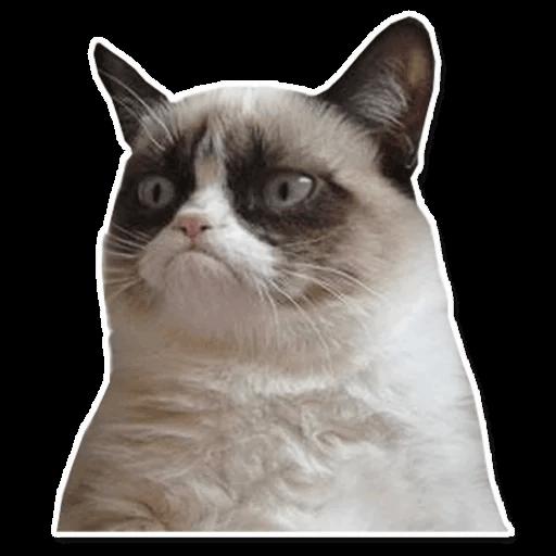 vse memy interneta stickers telegram 92