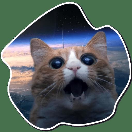 kosmicheskie koty stickers telegram 03