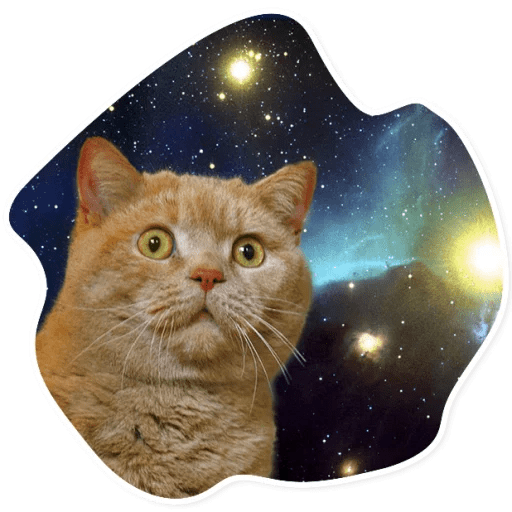 kosmicheskie koty stickers telegram 04