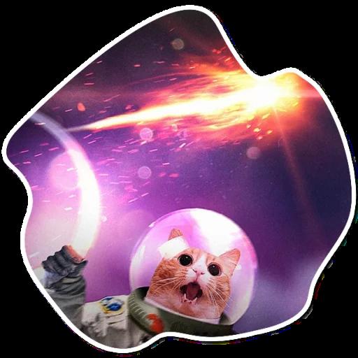 kosmicheskie koty stickers telegram 05