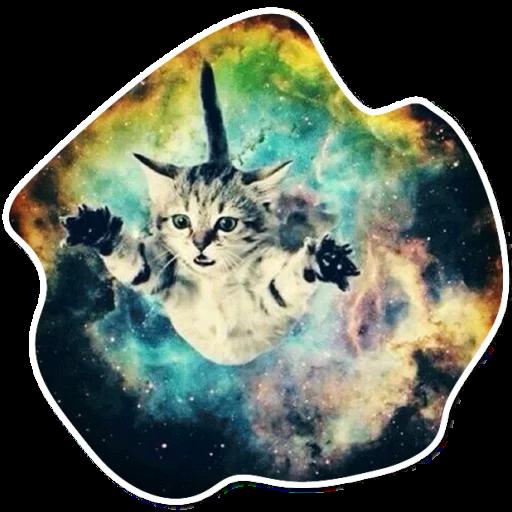 kosmicheskie koty stickers telegram 24